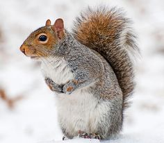 How to Hunt Squirrels in the Snow   Field & Stream