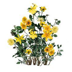 Photoshop Rendering, Photoshop Pics, Photoshop Brushes, Plant Images, Nature Images, Tree Psd, Flower Png Images, Plant Texture, Farm Gardens