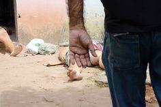 BLOG NOTÍCIAS: Número de crimes violentos caiu 30,9% no RN, apont...