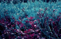 Teal Meadow Dew Drops Grass Photography Nature Red Lush Beautiful Field Plants Leaves Cool Wallpapers