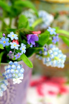 Spring - muscari and forget me nots