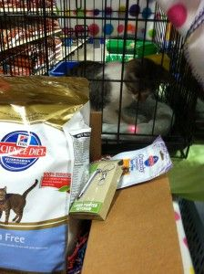 Da shelter kitties did #winwithhills fanks to ma @Klout perk from @Hill's Pet Nutrition YAY @onebyoneinc
