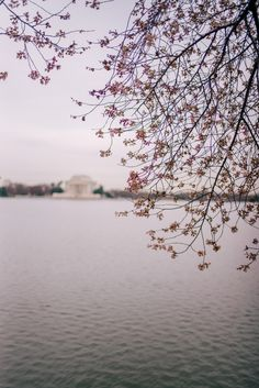 Gal Meets Glam 36 Hours In Washington D.C. - Spring cherry blossoms
