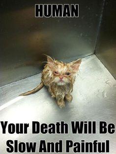 cute animal kitten threat - Cat memes - kitty cat humor funny joke gato chat captions feline laugh photo