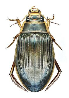 105 Best insects images in 2016 | Beetle insect, Beetles