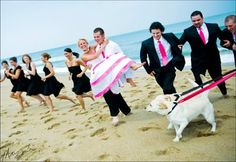 dogs in pink wedding!
