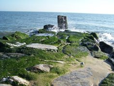 Rehoboth Beach New Years day 2011
