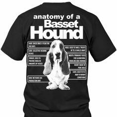 Anatomy of a basset hound