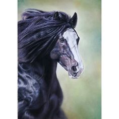 A recent pastel commission in memory of this much loved horse. #horse #horses #horseportrait #equine #horseandrider #equestrian #shirehorse #pony