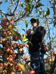 Twin Hill Ranch - Apple Picking