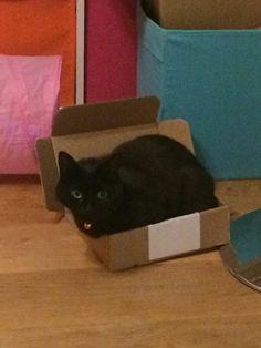 Small cat - smaller box