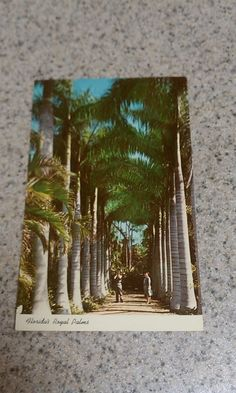 Vintage ephemera postcard that has not been used. Features Florida royal pines. No stains. A llittle vintage yellowing. No tears. Very good