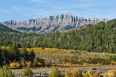 Fall comes early to the high country of Montana.  While the plains are still baking in the heat of summer, the Continental Divide is taking on the hues of autumn.  This scene of the Rocky Mountain Front Range was taken near Choteau, Montana, USA.