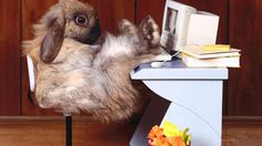 Funny animals today