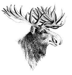 Vintage Clip Art - Moose - The Graphics Fairy