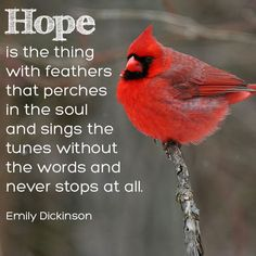 Hope is the thing with feathers that perches in the soul - Emily Dickinson Hope Is The Thing With Feathers, Bird Quotes, Bird Sayings, Adventure Magazine, Northern Cardinal, Cardinal Birds, Cardinal Meaning, Memories Quotes, Emily Dickinson