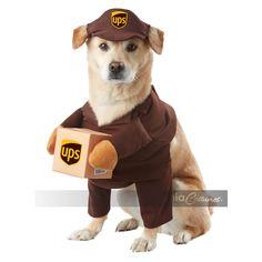 Diy dog costumes harry potter halloween diy harry potter and 38 best dog halloween costumes of all time solutioingenieria Images
