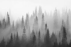 Wall mural Misty forest black and white | Photo wallpaper - Happywall