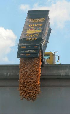 Ducks are dropped from the South Knoxville Bridge during the Great Knoxville Rubber Duck Race in Knoxville, Tennessee. Stuff To Do, Things To Do, East Tennessee, Rubber Duck, Great Photos, Nashville, Places To See, Racing, America