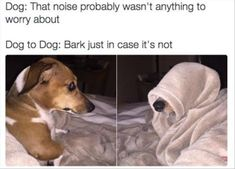 24 Funny Animal Pictures Of The Day #funny #picture
