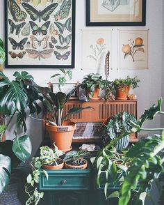 Pink Baby Room: Amazing Photos and Inspirations! - Home Fashion Trend Rustic Bedroom Design, Rustic Design, Hanging Plants, Indoor Plants, Belle Plante, Decoration Plante, Plant Labels, Plant Aesthetic, Modern Master Bedroom