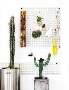 집 안에 들인 푸르름 한 점, 겨울 식물 기르기 이미지 13