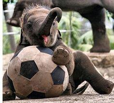 Le soccer c'est ma vie⚽️⚽️⚽️⚽️