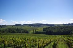 Pay de Bergerac vineyards drowse in the sun: thematuretraveller.co.uk