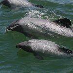 All Activists: Help Protect Maui's Dolphins | World Wildlife Fund