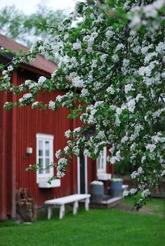 Apple of My Eye Cottage. Swedish Cottage, Red Cottage, Swedish House, Country Life, Country Living, Country Charm, Red Houses, Farms Living, Down On The Farm