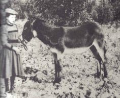 Young Rose Wilder with her her mule, Spookendyke. Laura and Almanzo gave her the mule to ride to school, but it was so stubborn she ending up walking most of the time.