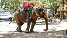 Ces attractions touristiques qui maltraitent les animaux - Fondation 30 Millions d'Amis