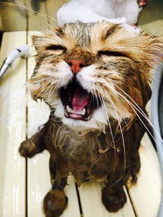 シャワー中の ふーちゃん
