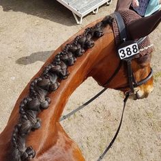 By popular demand, we're excited to present the Reverse Scallop Braid Tutorial! Mikayla Vosseller shows us this gorgeous and unique (but totally do-able!) show braid that will have you standing out from the crowd in the ring. Horse Mane Braids, Horse Hair Braiding, Cute Horses, Pretty Horses, Beautiful Horses, Beautiful Braids, Horse Clipping, Horse Grooming, Horse Tips