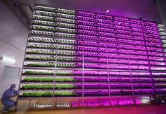Joe Penna investigates how we're using technology for intensive horticulture, enabling experiments on thousands of plants.