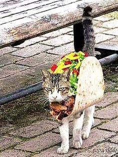 Too funny. I had to post.  - 51件のもぐもぐ - Tacos anyone? lol by Johnny