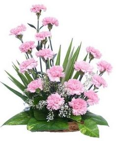 basket_arrangement_of_20_pink_carnations.jpg (410×500)