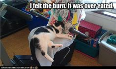 I felt the burn. It was over-rated #cats #lolcats #burn #exercise #funny #hunour