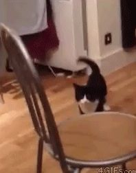 cat rides away on his invisible horsey