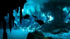 Diving in Cenotes in Playa Del Carmen Shark Diving, Shark Swimming, Cave Diving, Scuba Diving, Need A Vacation, Dream Vacations, Underwater Caves, Cozumel Mexico, Cenote Mexico