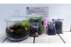 Pick Your Plum Terrarium Kit