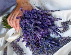 Лавандовая Продукция Organic от iHerb http://ru.iherb.com/lavender?rcode=jsj139 Лаванду используют при различных типах боли, в том числе: боли в мышцах, напряжение мышц, ревматизм, растяжение, боли в пояснице, люмбаго. Регулярный массаж с маслом лаванды обеспечит облегчение от болей в суставах. Все про iHerb https://vk.com/ecoiherb