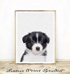 Baby Border Collie  Wall Art, Border Collie Print, Farm Sheep Dog, Nursery Animal Decor, Colour Photo, Baby Room Decor,   #073