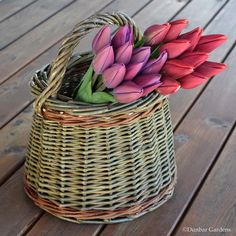 https://flic.kr/p/FMzuXC | tulip time | Skagit Valley tulips in a Katherine Lewis willow basket made from farm grown willows.