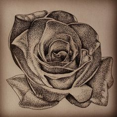 Pen and Ink Rose