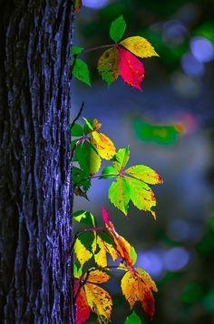 Lichtspiel am Baum