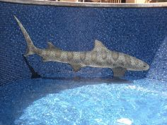 Tile mosaic in swimming pool, designed by Bob Vogland of Oahu. Metal Pool, Wholesale Plants, Ceramic Tile Art, Pool Contractors, Underwater Painting, Pool Coping, Artistic Tile, Ground Cover Plants, Building A Pool