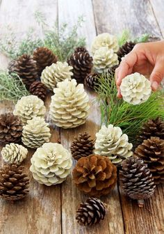 """Make beautiful """"bleached pinecones"""" in 5 minutes without bleach! Non-toxic & eas… Make beautiful """"bleached pinecones"""" in 5 minutes without bleach! Non-toxic & easy DIY pine cone craft, perfect for fall, winter, Thanksgiving & Christmas decorations! Easy Diy Crafts, Christmas Projects, Holiday Crafts, Pinecone Crafts Kids, Pinecone Ornaments, Pumpkin Crafts, Pine Cone Crafts For Kids, Pinecone Centerpiece, Acorn Crafts"""