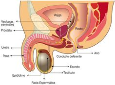 cachi prostata