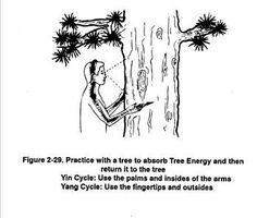 Tree energy.